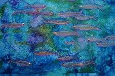 BevLourenco_LittleFishes