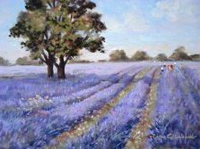 GinaGrimwood_LavenderField