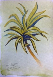 MaureenJones_Palm